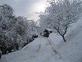 Zimné foto